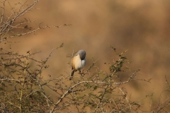 Birds from Western India