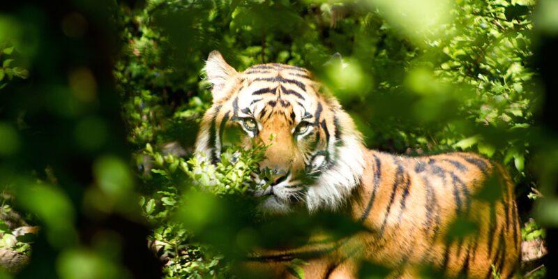 animal-animal-photography-beast-162306
